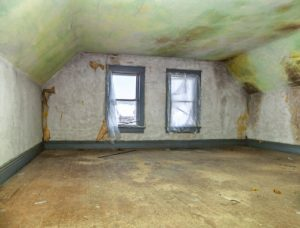 Attic Mold and Stains