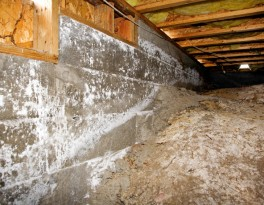 Crawl Space Mold & Moisture