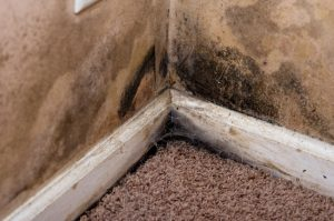 mold removal colorado springs