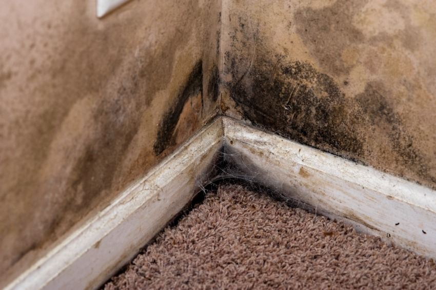mold remediation company colorado springs