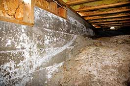 crawl space cleanout and mold removal