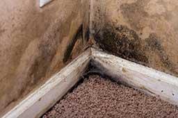 mold removal colorado springs